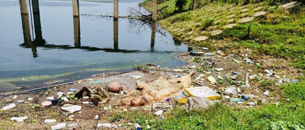 岳阳汨罗:汨罗江漂浮多头死猪,政府组织打捞处理