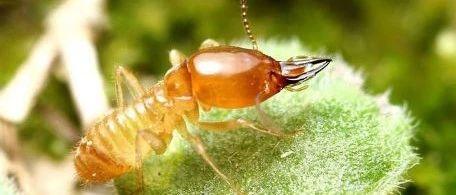 向白蚁学低碳生活