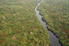 在全球无树土地广植1.2万亿棵树 可吸收2/3人为碳排放