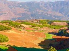 沈仁芳等:酸性土壤可持续利用