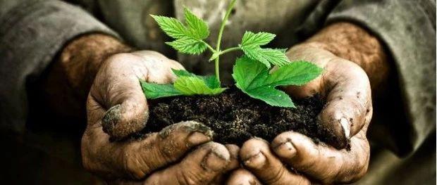"""土壤有机质下降的""""后果""""!所有人都"""