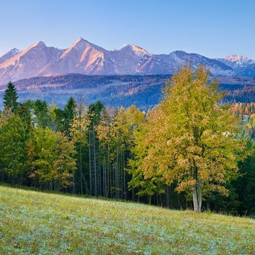未来林业之风向:《欧洲林业2040年愿