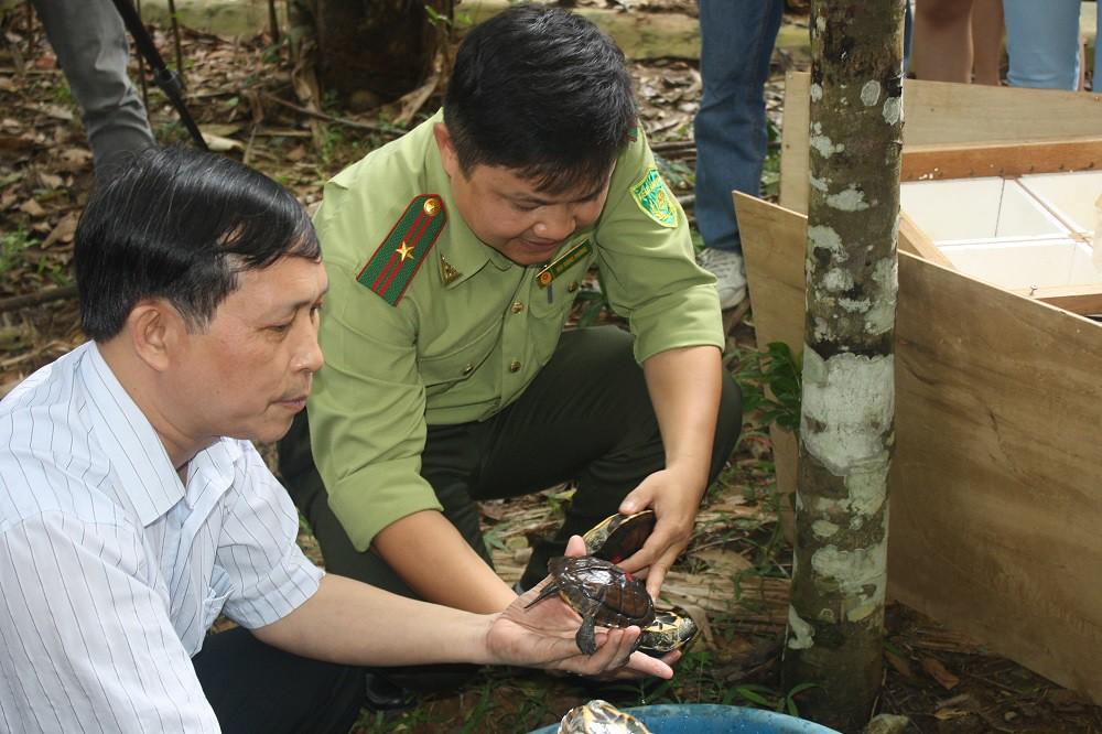 保护濒危原生龟类 越南官方启动五年行动计划