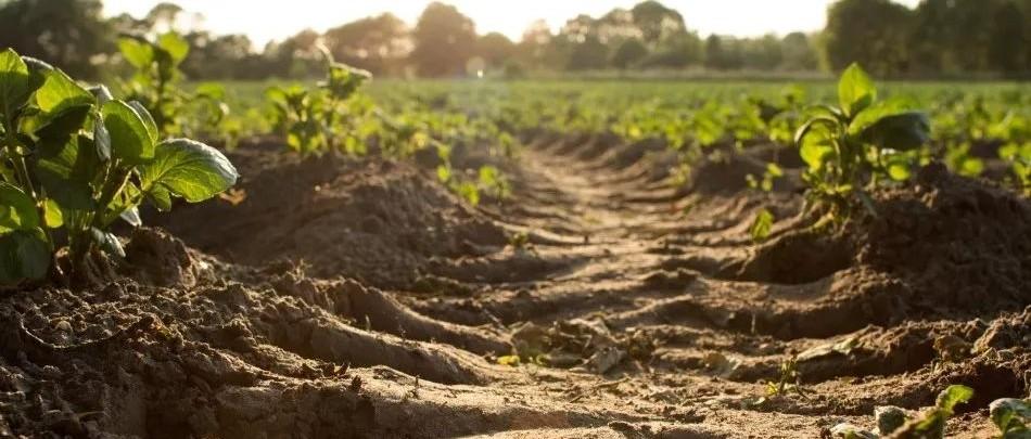你是否知道土壤是不可再生资源?