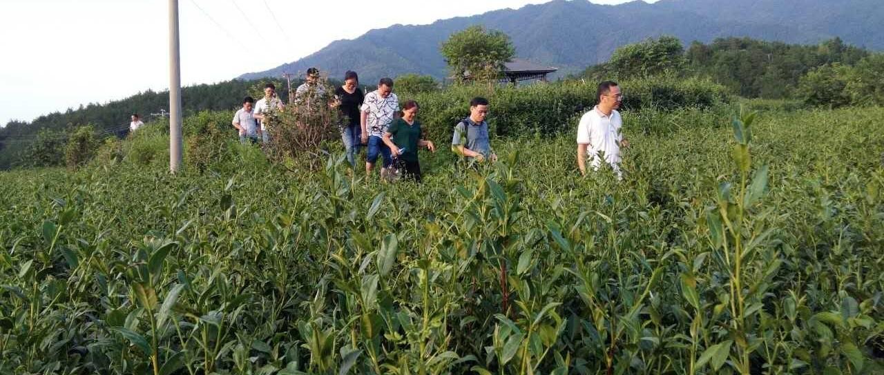 福建省农业厅绿办主任周乐峰带队视察