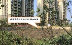 典型案例(1):海南澄迈县肆意围填海