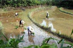粮农组织欢迎联合国气候变化报告 强调