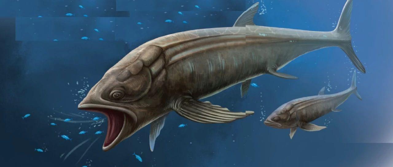 灭绝了的庞然大物――利兹鱼
