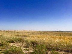 添加氮素可提高荒漠植物对降水变化的敏感性