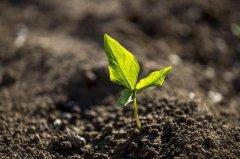 黏土矿物对重金属污染土壤的修复研究