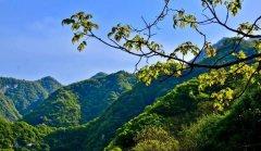 西安市召开省委秦岭生态环境保护专项