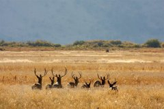 《野生动物保护法》:修改需认真评估回归理性