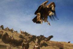 牧人摄影师镜头下的高原动物世界