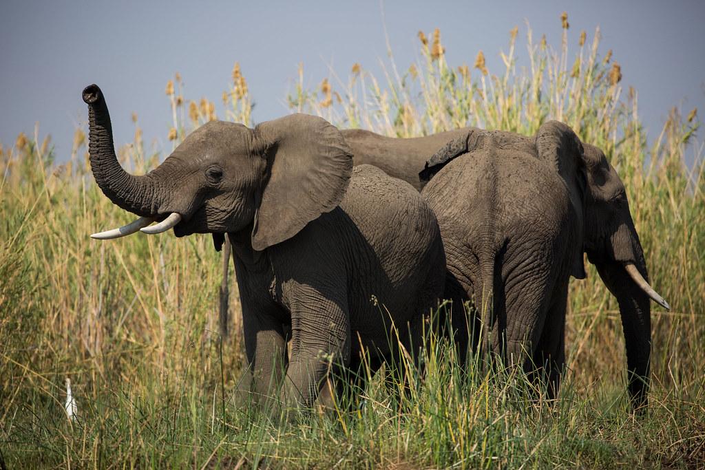 华盛顿公约将着手修订550种野生动植物