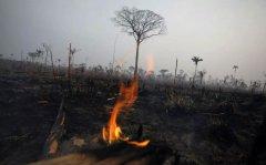 亚马孙雨林还要烧多久