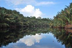 全球变暖有助植物生长? 研究:缺水会
