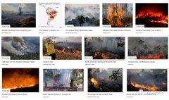 亚马孙雨林火灾敲响气候灾难警钟