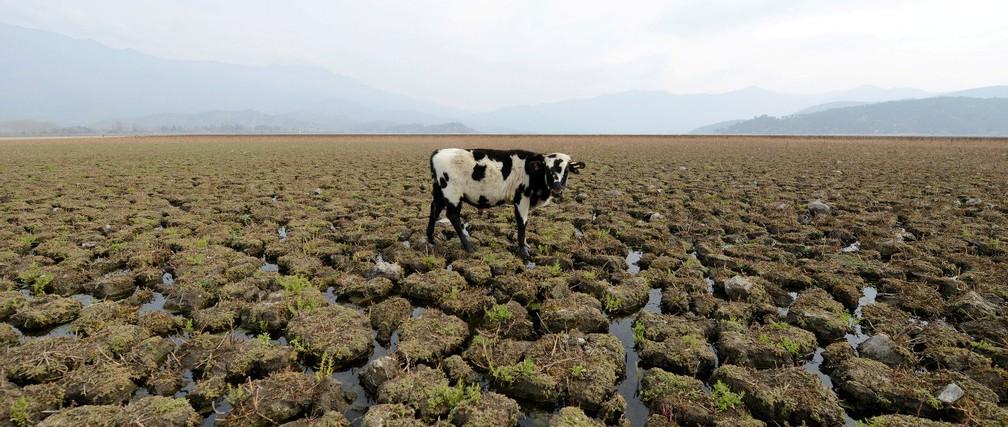 无论穷国富国,气候变化都会削弱其经