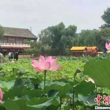 北京森林覆盖率达43.5% 百姓开窗见绿愿景逐步实现