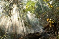 各国启动生物多样性保护新框架讨论