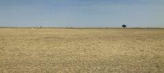 联合国防治荒漠化机构呼吁进行土地恢复 以拯救地球 促