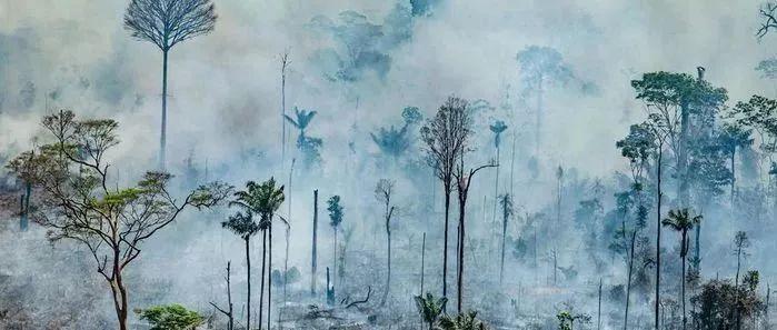 亚马逊森林大火背后的环境教育分析