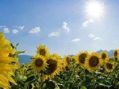 气候变化促进了植物多样性增加