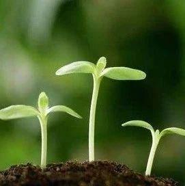 植物可以修复被汞污染的土壤吗?