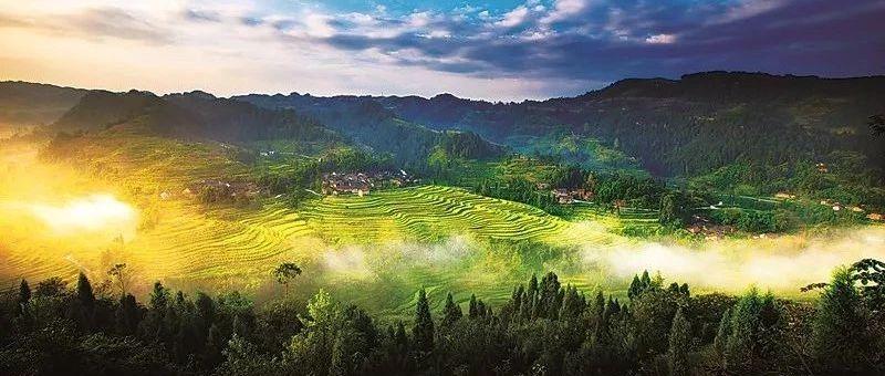 北京天津重庆部署天然林保护修复工作