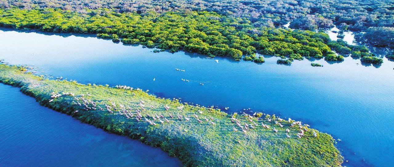 天津北大港湿地保护修复成效显著 鸟类增至276种