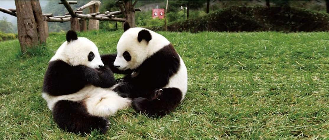 """""""熊猫人""""用行动诠释:忠诚 担当 奉"""