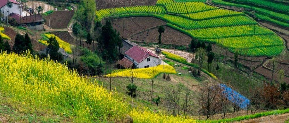 关于农村污水处理,可以借鉴这3套技术