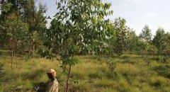 联合国粮农组织:布隆迪林业活动家获