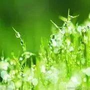 刘君言:解决环境问题 绿色金融能起核心作用