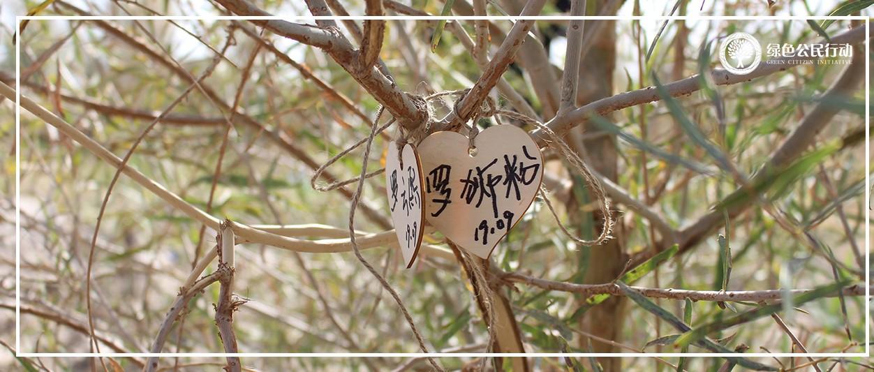 中国绿化基金会探访团 奔赴新疆  相聚胡杨林
