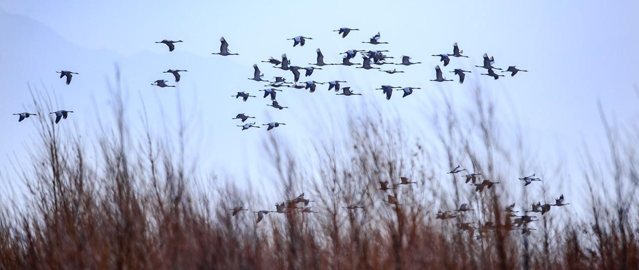 国家林草局部署开展秋冬季候鸟保护