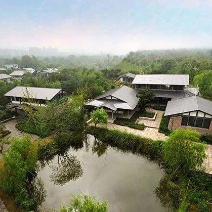保护西溪湿地,马云公益基金会捐了1个亿