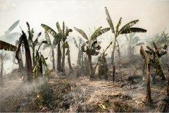 老挝的香蕉园:就业与污染同在