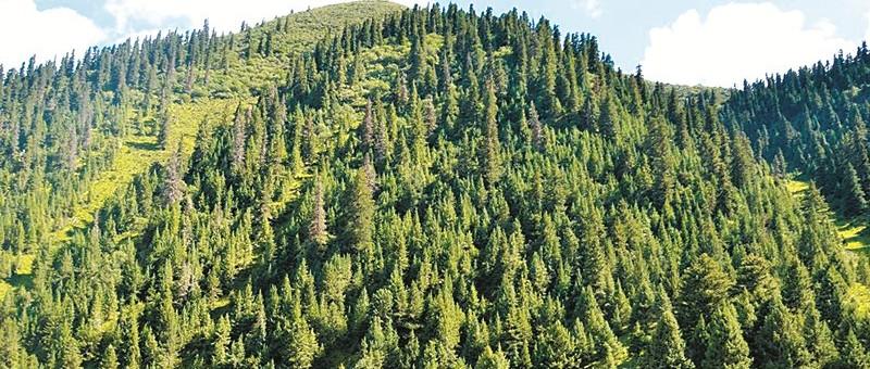 盛炜彤:我国要重视人工林及其基地的植被控制
