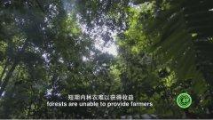 首部林业碳汇交易项目开发专题科教片