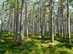 植树阻止气候变化 科学家说成效被高估