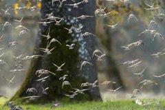 30亿只飞鸟消失了,与新型杀虫剂有关