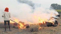 空气污染太严重 印度最高法院谕令禁焚