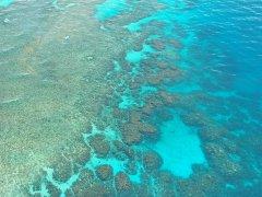 环境管理不善!大堡礁集水区验出高浓度杀虫剂