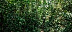 粮农组织启动改善森林数据监测项目 协助各国落实气候