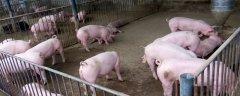 """禁止环保""""一刀切"""" 能否让猪肉降价?"""