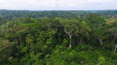 新算法估计:热带非洲植物1/3濒临灭绝