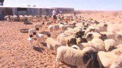 非洲南部陷旱灾 农民牲畜受害惨