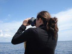 鲸豚观察员:用对海洋的爱支撑起枯燥