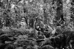 海南新物种:打开研究新视野